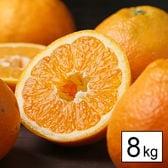 【8kg】愛媛県産 伊予柑