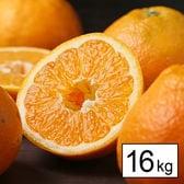 【16kg】愛媛県産 伊予柑