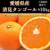 【約10kg】愛媛県産 清見タンゴール(ご家庭用・傷あり)