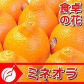 「予約受付」ミネオラオレンジ5kg入り