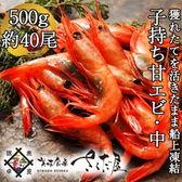 【500g】子持ち越前甘えび中サイズ500g約40尾前後