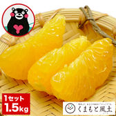 【1.5kg】熊本県産 はっさく柑(八朔・紅八朔) ※ご家庭用 サイズ不選別