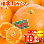【10kg】和歌山県産 有田みかん 家庭用