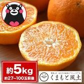 【1セット5kg】甘熟ポンカン※ご家庭用(傷あり サイズ不選別)