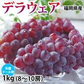【1kg 8~10房】福岡県産 ぶどう デラウェア
