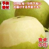 【予約受付】9/5~順次出荷【3kg/7-12玉】20世紀梨