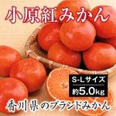 【予約】12/6~順次出荷【約5.0kg(S-L)】香川県産 小原紅早生みかん