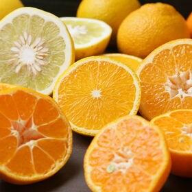 愛媛県産柑橘ファミリーセット(詰め合わせ) 8kg|みかん好きにはたまらない!色々なみかんを試せるチャンスです!!【防腐剤不使用】※若干の葉傷・コク点あり