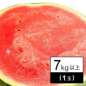 【予約受付】西瓜(すいか) 1玉(7kg以上)