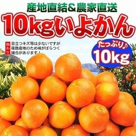【10kg】愛媛県産 伊予柑(ご自宅用)
