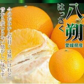 【 5kg】愛媛産 八朔(はっさく)