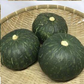 宮古島産の栗かぼちゃ5kg(5~10個)