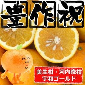 "【20kg】大豊作 美生柑""みしょうかん""(ご自宅用、傷あり)"