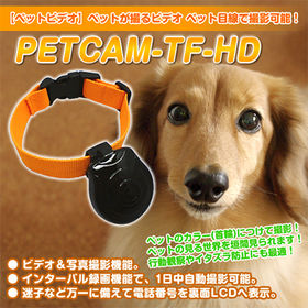 ペットの低い目線で録画、ペットカム! ペットの目線から見える...