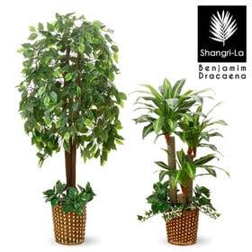 【ベンジャミン+幸福の木】人工観葉植物 インテリアグリーン