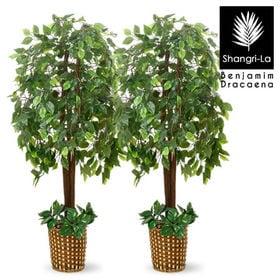【ベンジャミン2本セット】人工観葉植物 インテリアグリーン