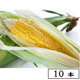 【予約受付】8/20~順次出荷 【10本】名寄 よねざわ農園...