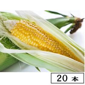 【予約受付】8/20~順次出荷 【20本】名寄 よねざわ農園...