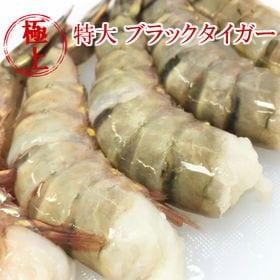 【1.8kg(約55尾)】特大エビ  ブラックタイガー