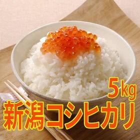 【5kg×1袋】令和元年産 新米 特選 新潟県産コシヒカリ