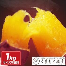 【1セット1kg】熊本県産 紅はるか ※大中小サイズ混合(不...