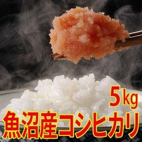 【5kg×1袋】令和元年産 新米 魚沼十日町産コシヒカリ