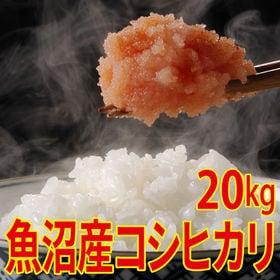 【20kg (5kg×4袋)】令和元年産 新米 魚沼十日町産...