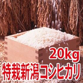 【20kg (5kg×4袋)】令和元年産 新米 特別栽培米新...