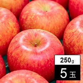 【250g×5玉】果物屋さんが選んだ旬の青森産ふじ