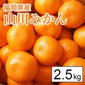 【2.5kg箱】福岡県産 山川みかん