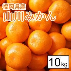 【10kg箱】福岡県産 山川みかん
