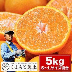 【1セット5kg(S-Lサイズ混合)】熊本県産 中村公俊さん...