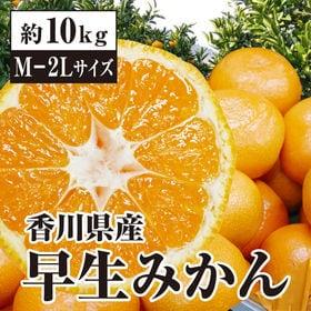 【約10kg(M-2L)】 香川県産 早生みかん(秀品)