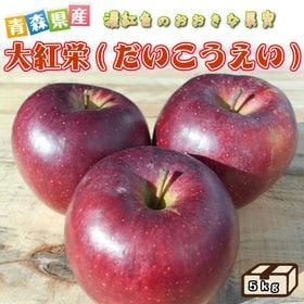 【5kg】青森県産りんご 大紅栄(だいこうえい)  ※ご家庭...