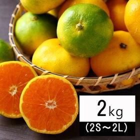 【2kg】吉田みかん(家庭用・2S~2Lサイズ込み)