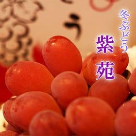 【約1kg(1-3房) 】岡山県産 紫苑 ぶどう
