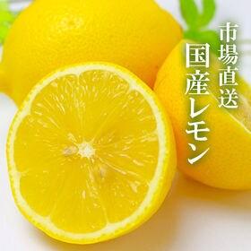 【約5kg】国産レモン JA全農 市場から直送