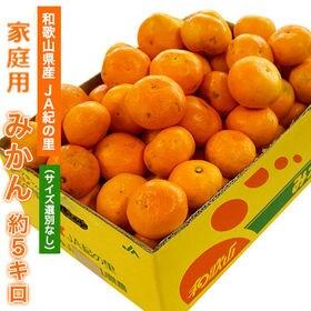【約5kg】和歌山県産 JA紀の里のみかん 家庭用