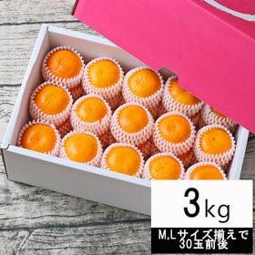 【3kg】特撰 吉田みかん(M、Lサイズ揃えで30玉前後・ネ...