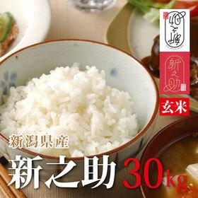 【30kg】令和元年産 新米 玄米 新潟県産新之助