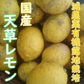 【3kg】国産レモン化成農薬一切不使用栽培「天草レモン」(4...