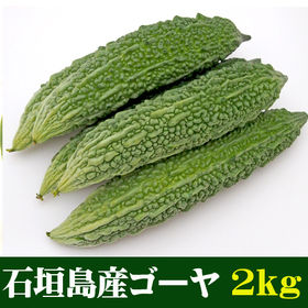 【約2kg(4~14本)】石垣島産ゴーヤ (苦瓜) 規格外 ...