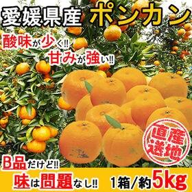 【5kgセット】 香りが強くコクのある甘みのポンカン (季節...