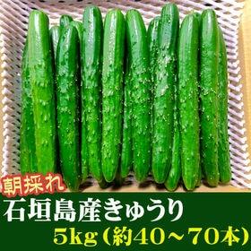 【5kg(約40~70本)】石垣島産 きゅうり