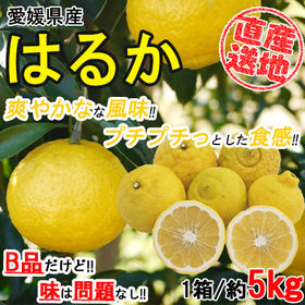 【5kgセット】 酸味は少なく上品な甘みのはるか (季節限定...