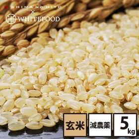 【5kg】北海道産 ななつぼし 玄米 特Aランク お米