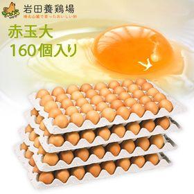 【計160個】赤玉 大160 ※破卵保障20個含む