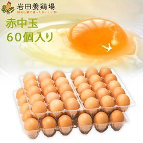 【計60個】赤玉 中60 ※破卵保障10個含む