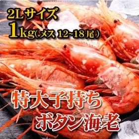 【1kg(12-18尾)】特大子持ちボタン海老2Lサイズ メ...