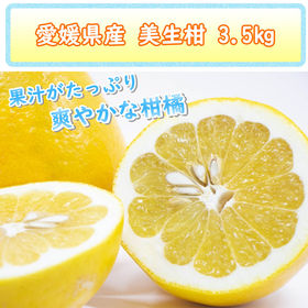 【3.5kg】愛媛県産 美生柑(河内晩柑)